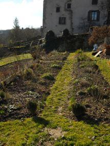 Crocuses & February Garden 077