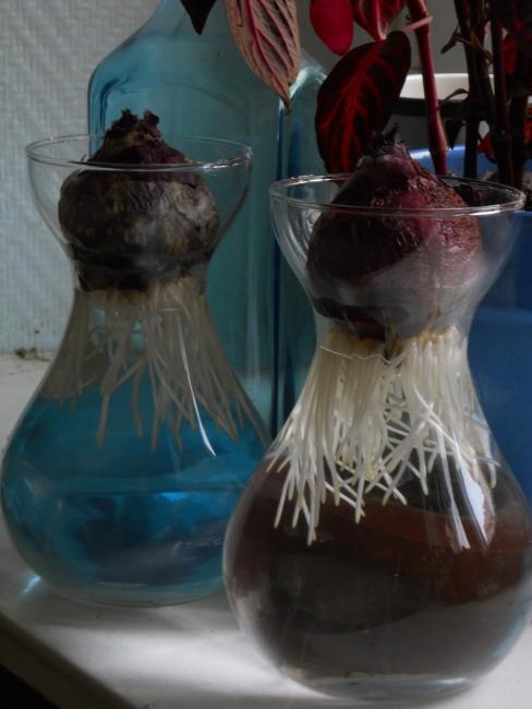 Hyacinths & Prunus 006