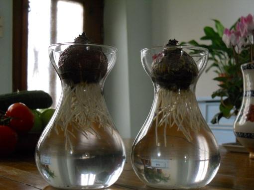 Hyacinths & Prunus 022