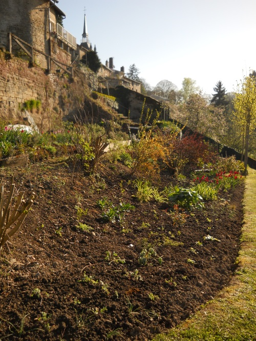 Tulips & artemesia foliage 035