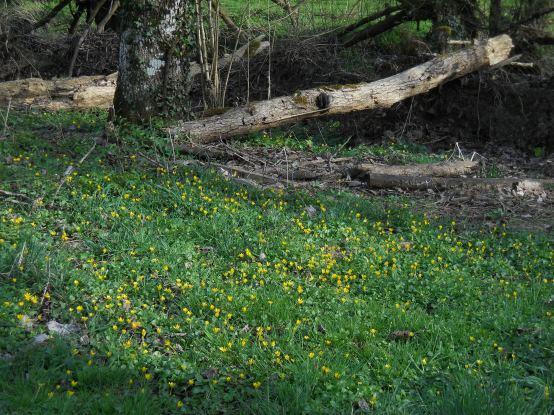 Wide shot April & tulips 084