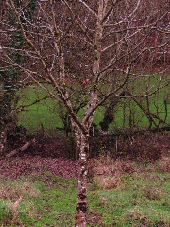 Tree-watching December 065