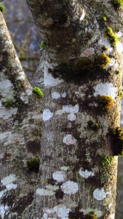 Tree-watching December 072