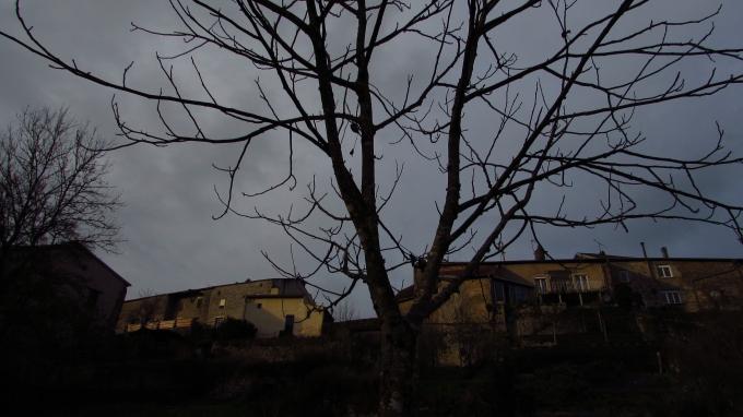 Tree-watching December 098