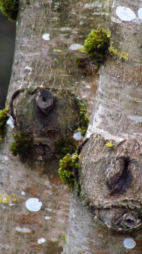 Tree-watching December 123