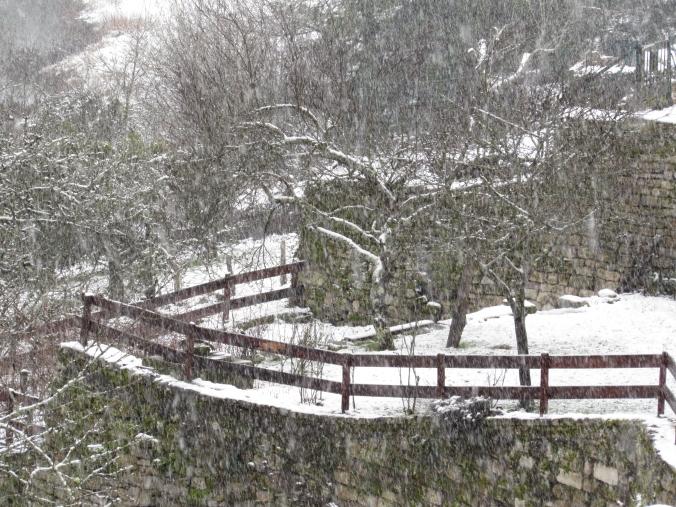 Forsythia & Snow 049