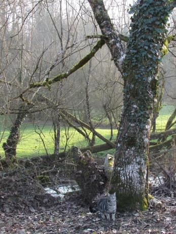 Tree Following February 129