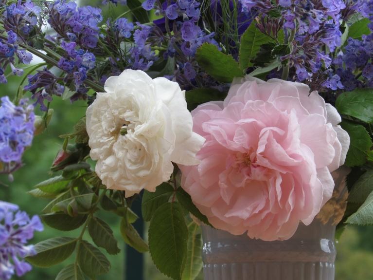 In a vase 059
