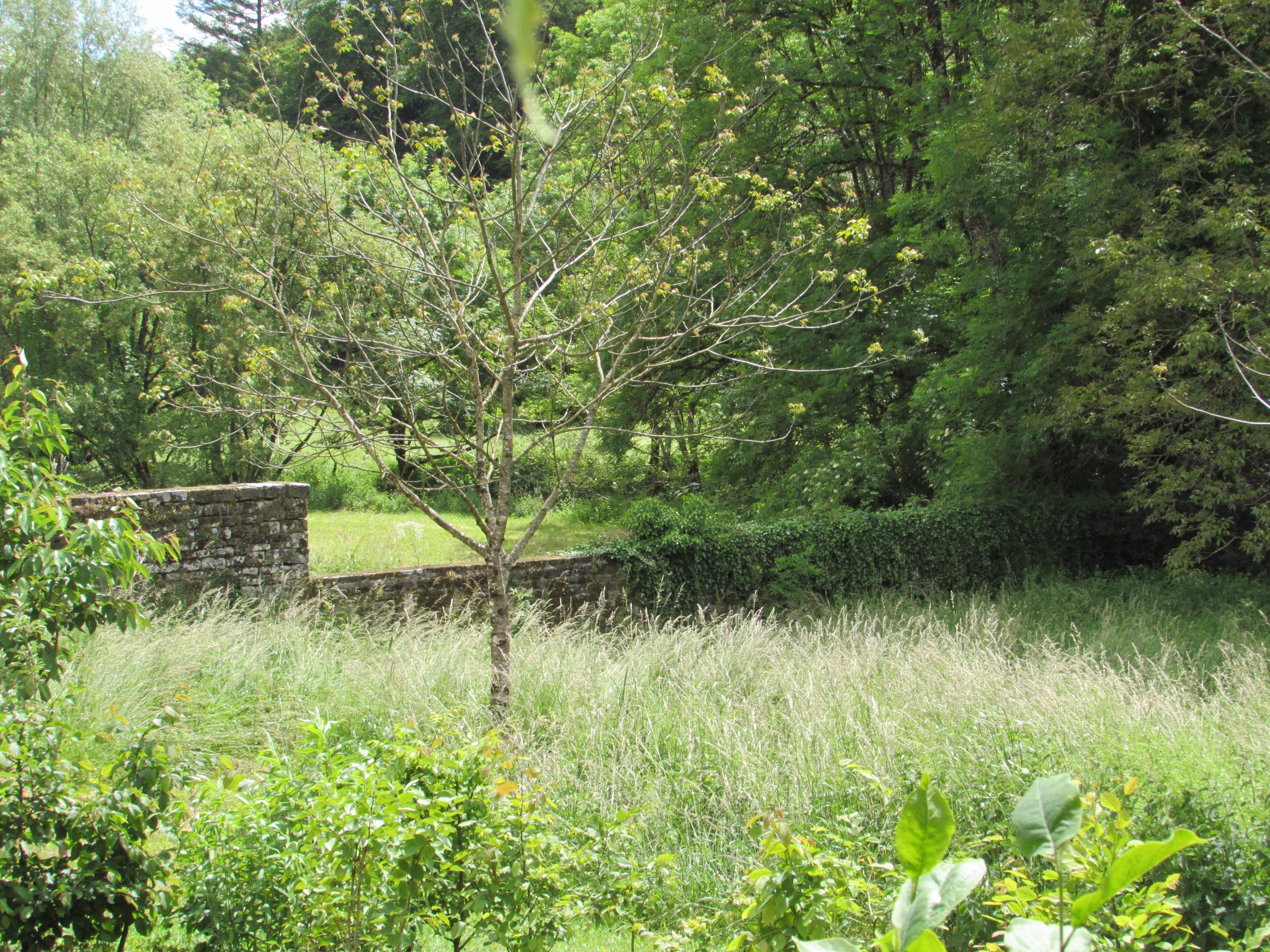 tree following garden dreaming at ch tillon. Black Bedroom Furniture Sets. Home Design Ideas
