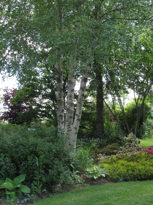 Tree Following & Jardin d'Ode 008