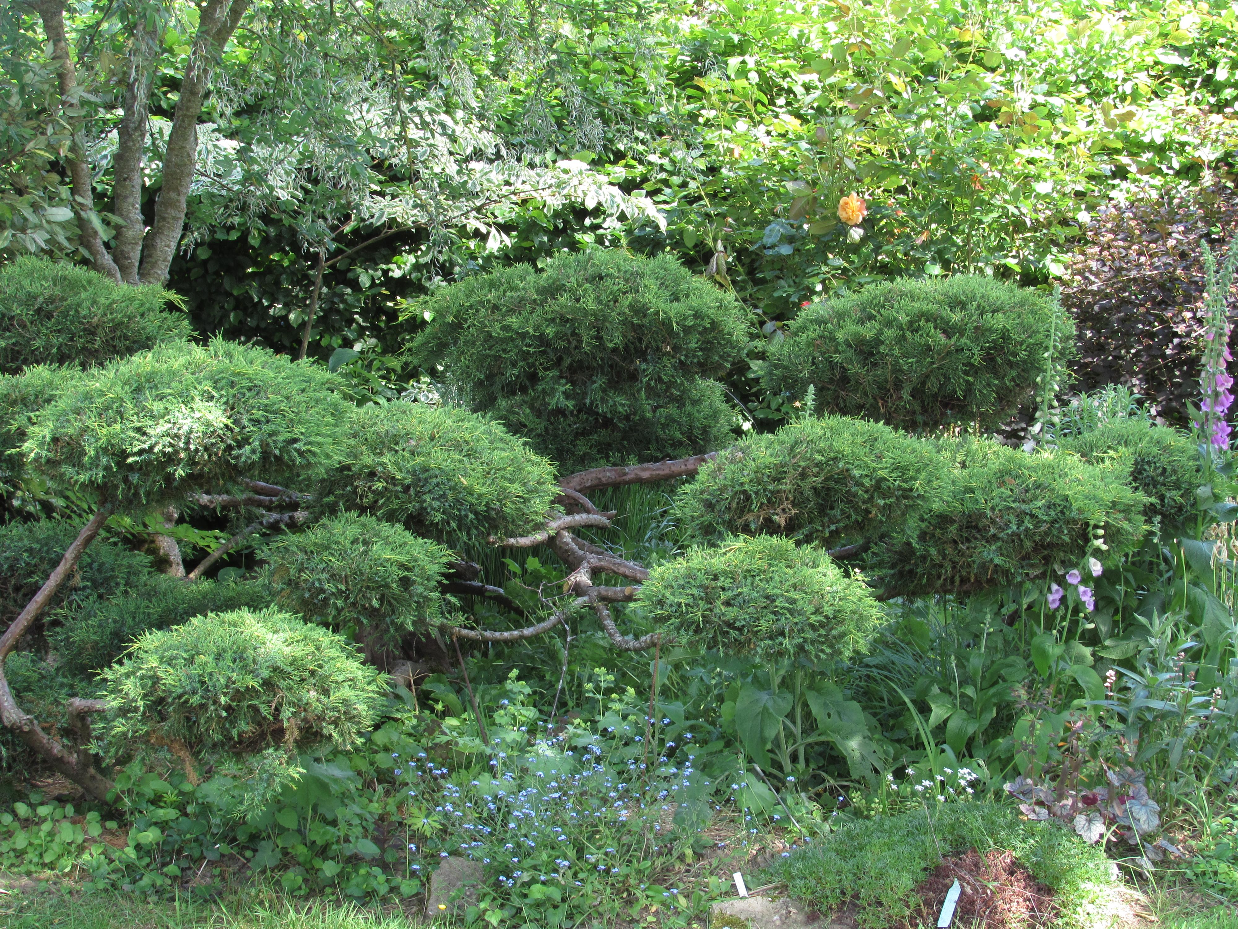french gardens to visit garden dreaming at ch tillon. Black Bedroom Furniture Sets. Home Design Ideas