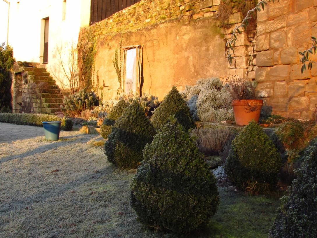 Winter frost 191