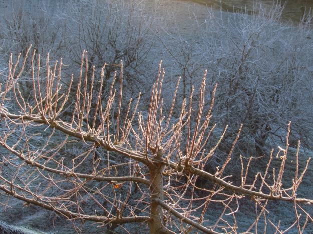 Winter frost 250