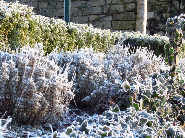 Winter frost 278