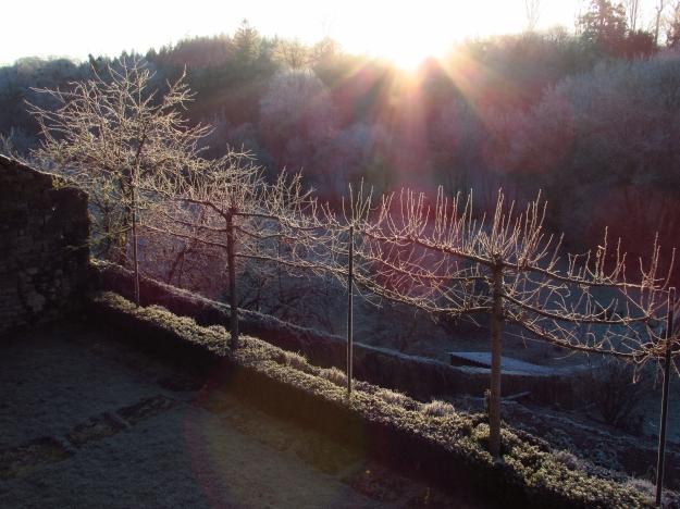 Winter frost 323