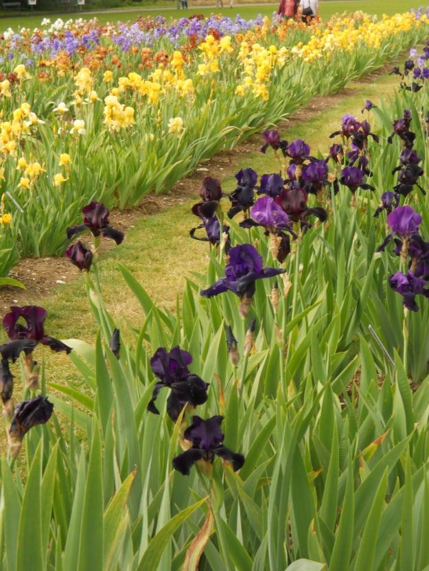 Botanic Garden.19 May 2011 002