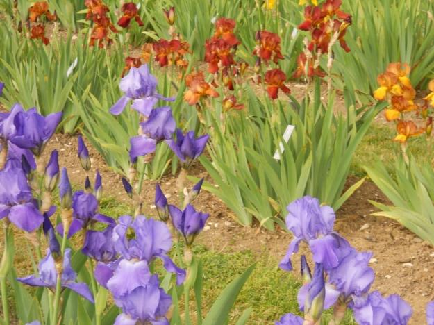 Botanic Garden.19 May 2011 005