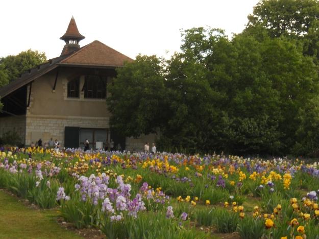 Botanic Garden.19 May 2011 009
