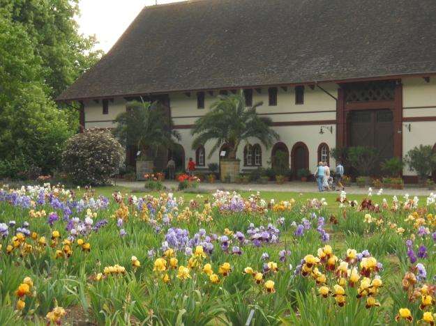 Botanic Garden.19 May 2011 011