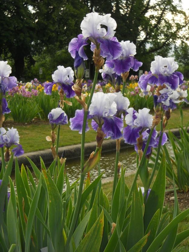 Botanic Garden.19 May 2011 022