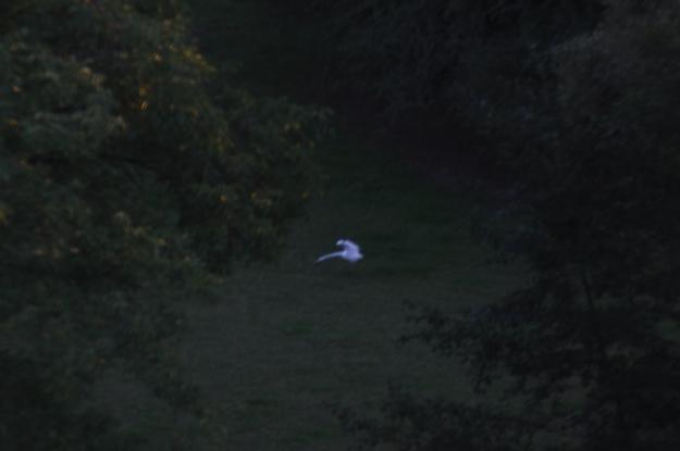 egret-6