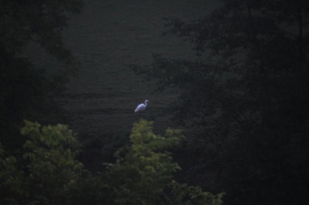 egret-8