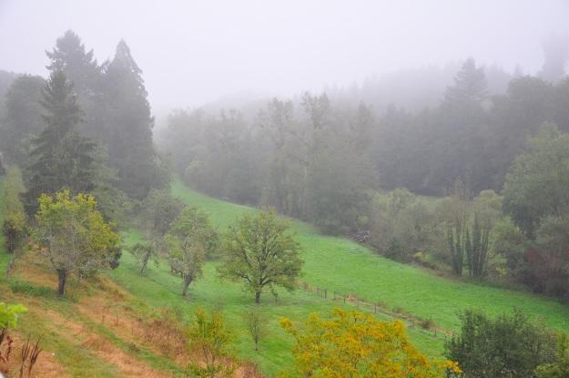 vivid-autumn-012