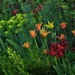 A few favourites … daffodils and tulips