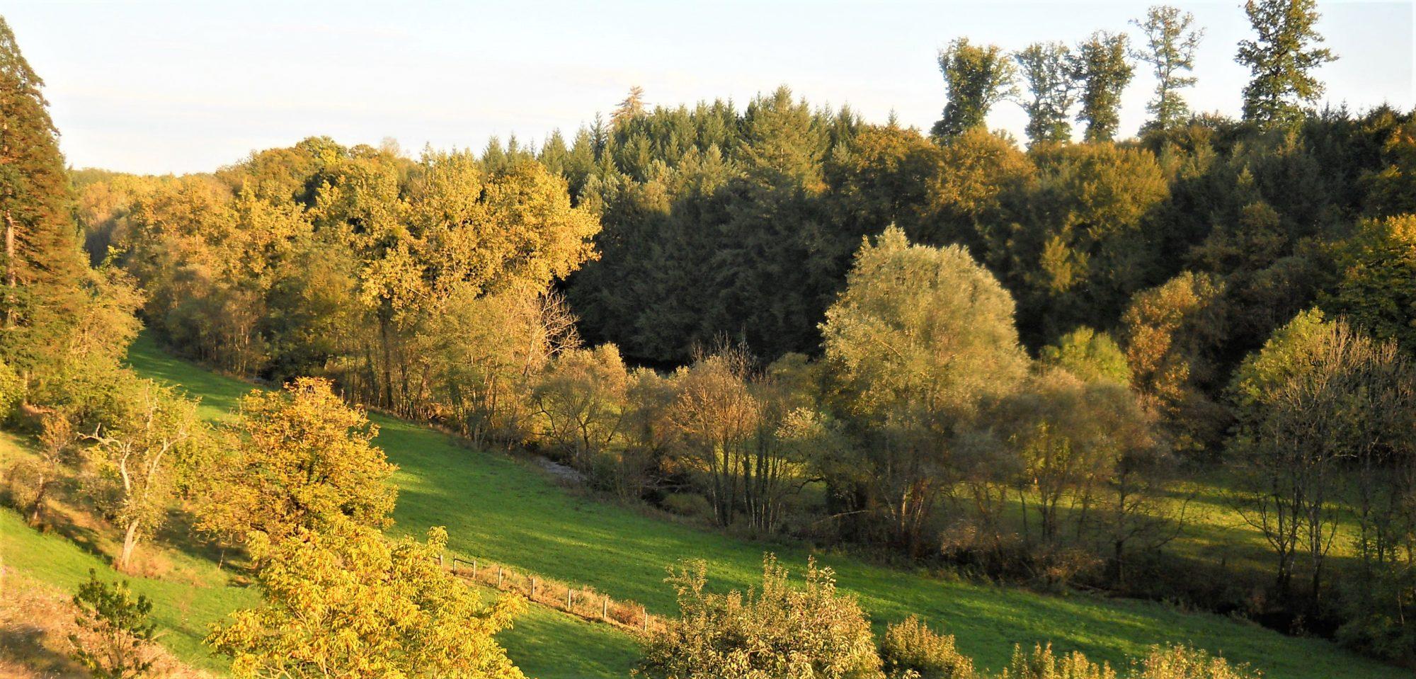 Garden Dreaming at Châtillon